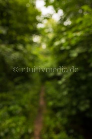 Grüner unscharfer Wald Hintergrund
