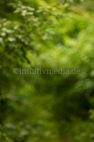 Wald Hintergrund Bokeh