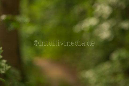 Natürlicher Background für Portrait
