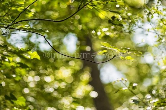 Wald und Regen