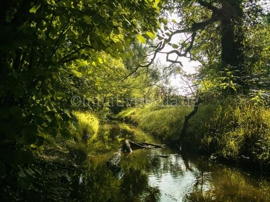 Grüne Eiche über dem Bach