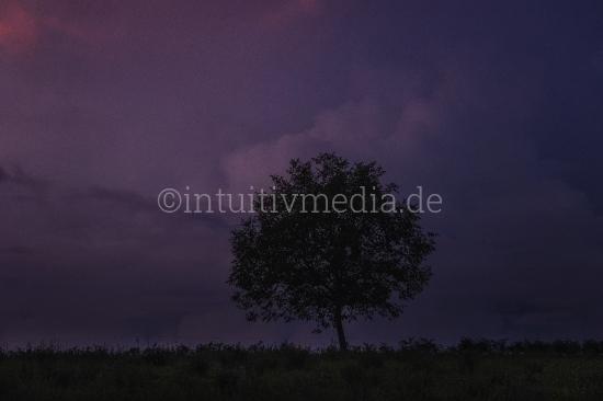 Schöner Baum auf grünem Feld