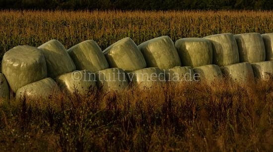 Heuballen im Maisfeld