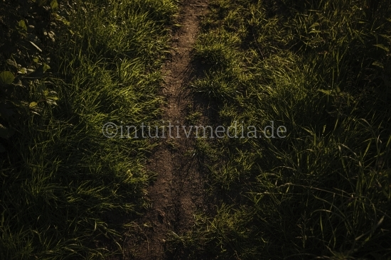 Schmaler Feldweg mit  Gras