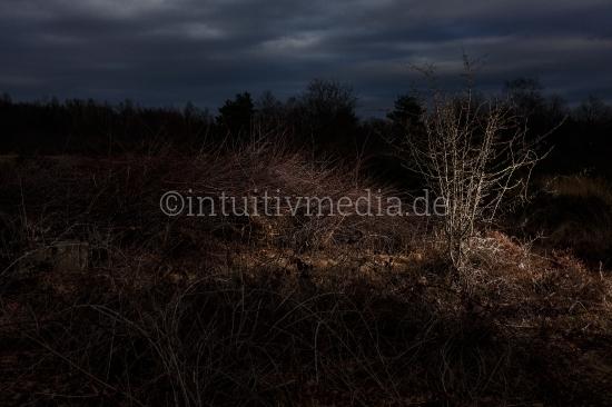Heide Landschaft am Abend