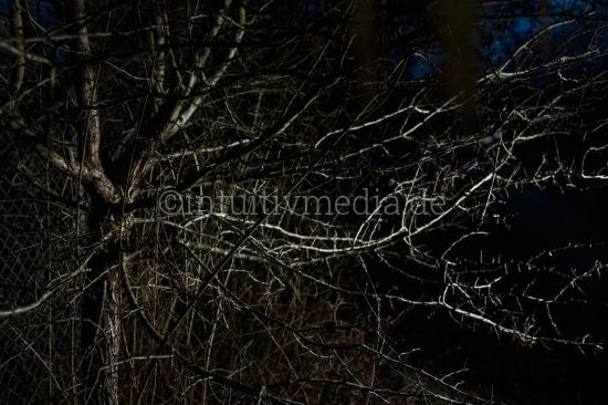 Dunkle Zweige Struktur