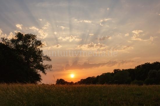 Sonnenaufgang über einem Feld