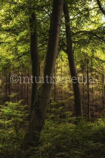 Schöne Baumstämme im Wald