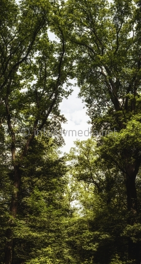 Waldpanorama XXL
