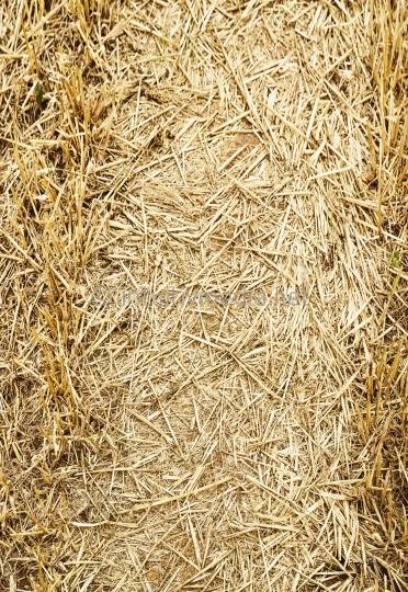 Goldenes Stroh