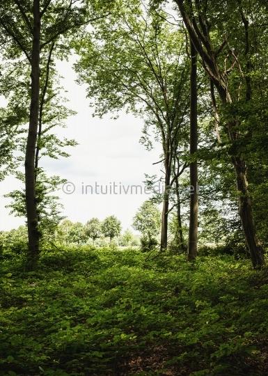 Fenster im Wald