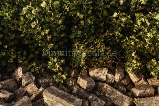 Rheinufer Steine und Sträucher