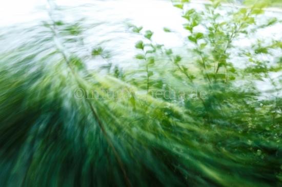 Wind und Pflanzen