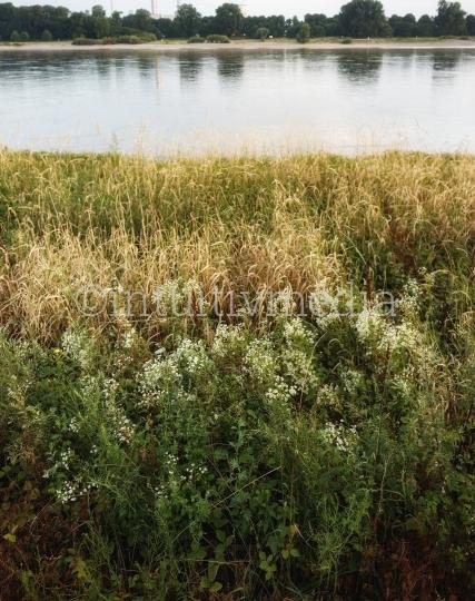 Wildes Rheinufer