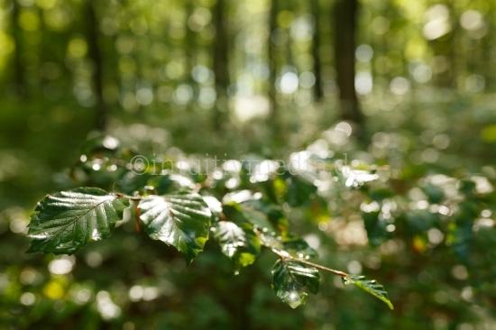 Nasser Zweig im Wald