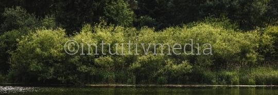 Bäume am See Ufer