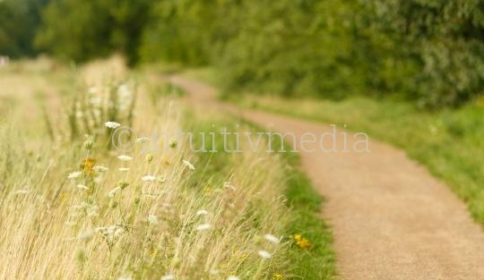 Sommerlicher Feldweg