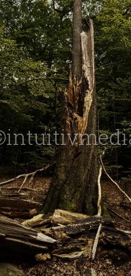 Abgebrochener Baumstamm