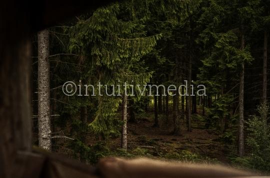 Blick vom Jagdsitz