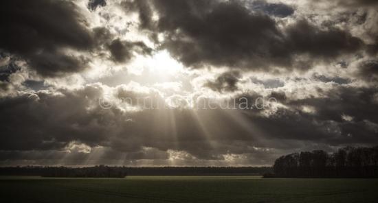 Sonnenstrahlen über dem Feld