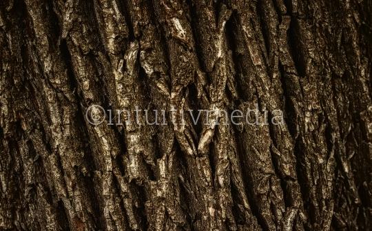 Baumrinde Struktur