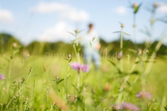 Auf der Sommerwiese