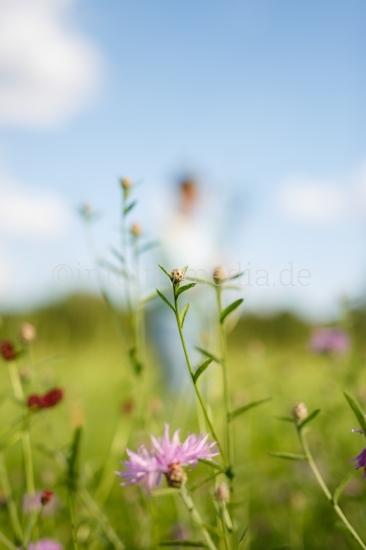 Kräuter Sommerwiese