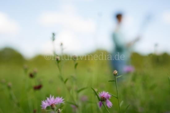 Wilde Blumen auf Sommerwiese