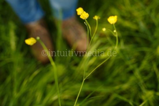 Butterblumen und Wanderschuhe