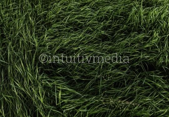 Wildes Gras - Feld von Oben
