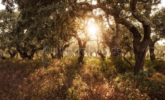 Korkeichen Wald in Portugal - Algarve
