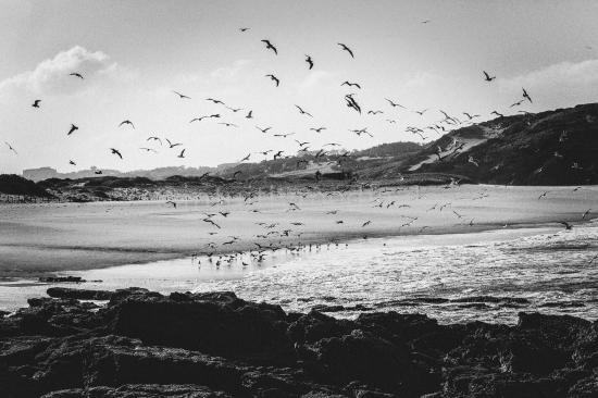 Möwen am Strand bei Peniche