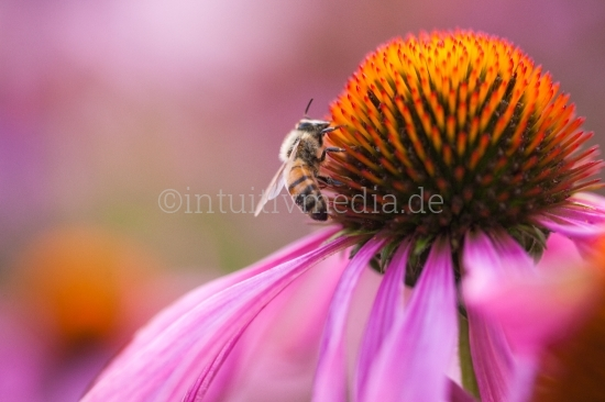 Blume mit Biene Makro
