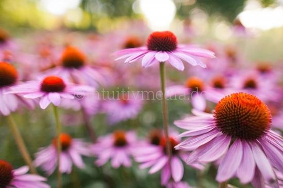 Blumen mit Unschärfe