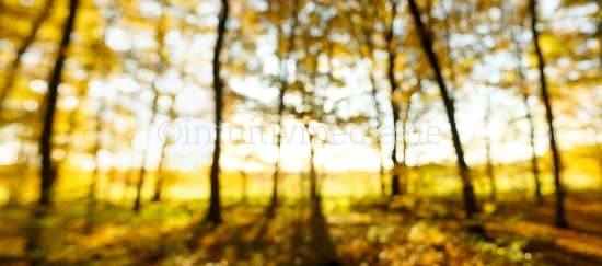 Herbst im Wald Panorama unscharf