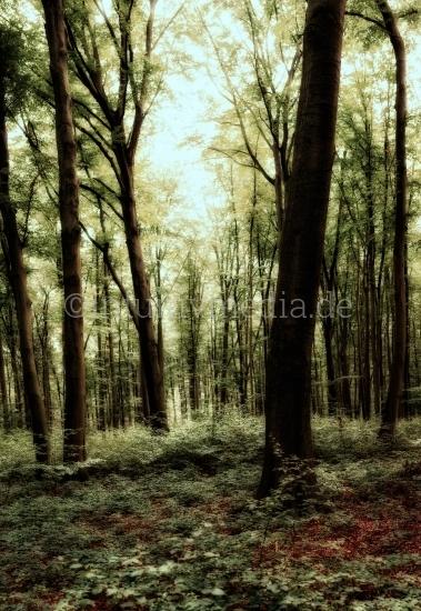 Wald mit Gegenlicht