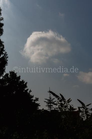 Wolke über Pflanzen