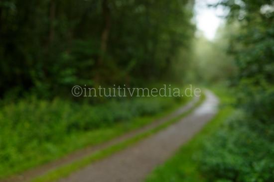 Weg durch das Grüne