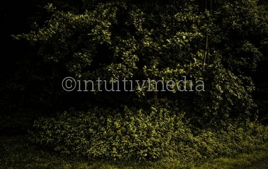 Dunkle Sträucher am Waldrand