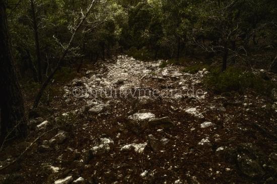 Leuchtender Wald Weg