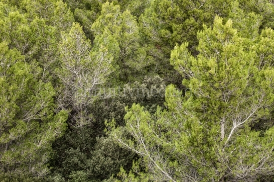 Wald auf Mallorca