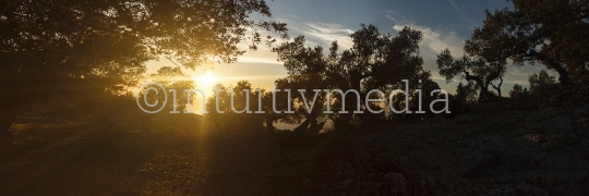 Sonnenuntergang im Olivenhain