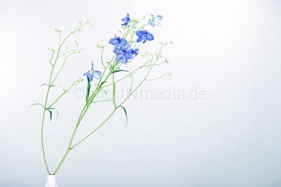 Blaue Blumen mit Copyspace
