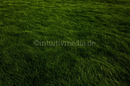 Grünes Gras - Rasen Wiese
