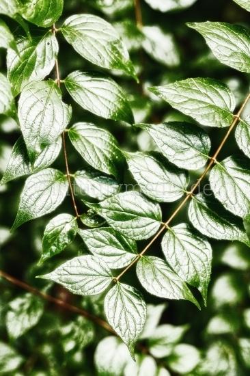 Blätter Melodie