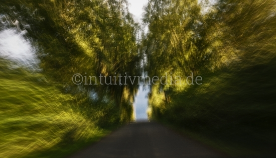 Wald & Bäume mit Bewegung