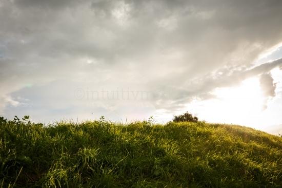 Grashügel mit Gegenlicht