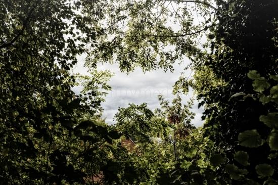 Fenster aus Ästen und Laub