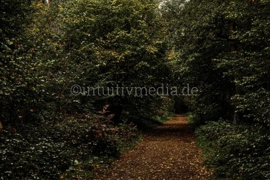 Wilder Weg im Herbst