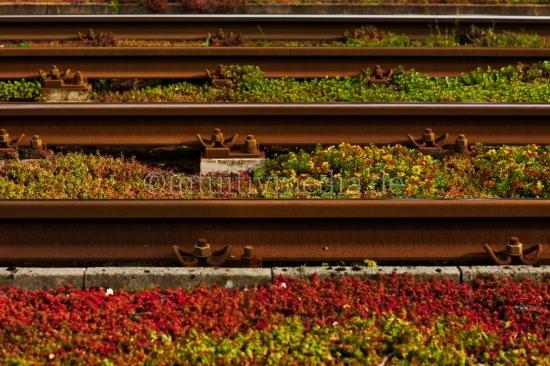 Bahn Gleise mit Blumen